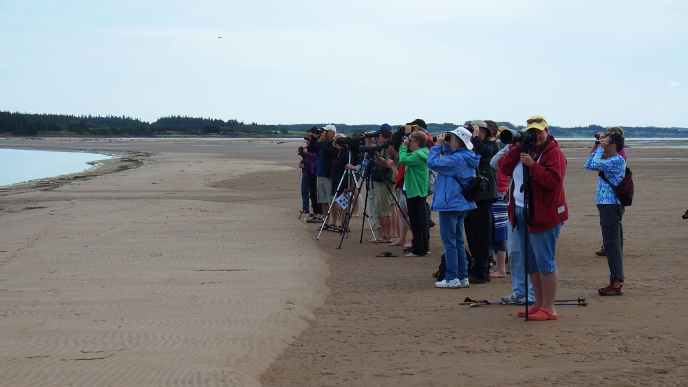 Shorebird Ecology