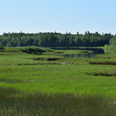 Acadian Marshes Natural Area